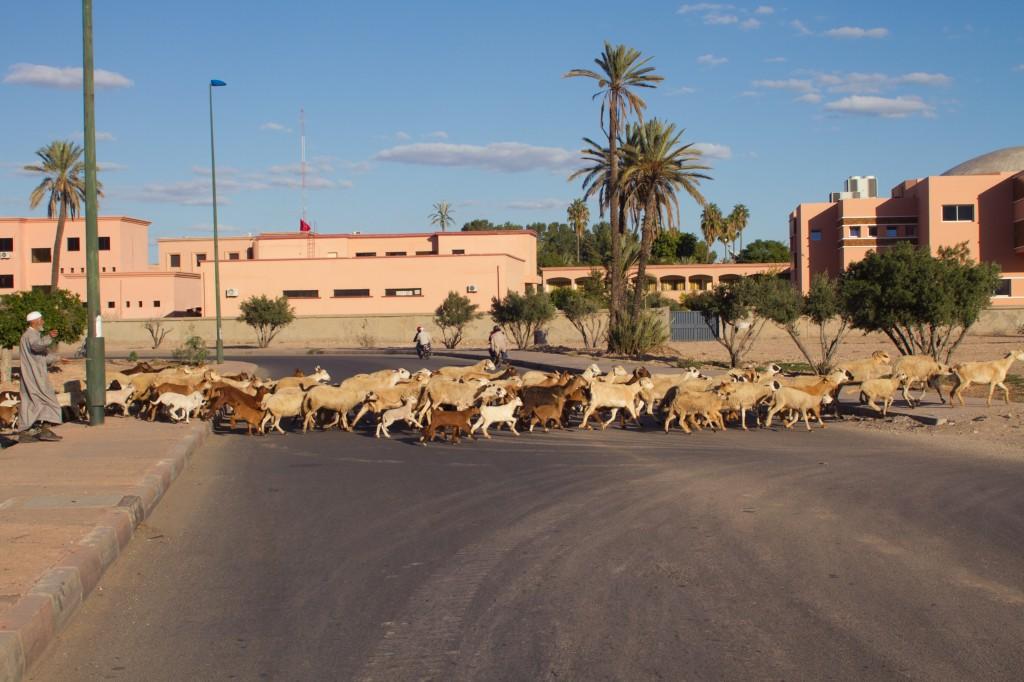 Marrakech-31